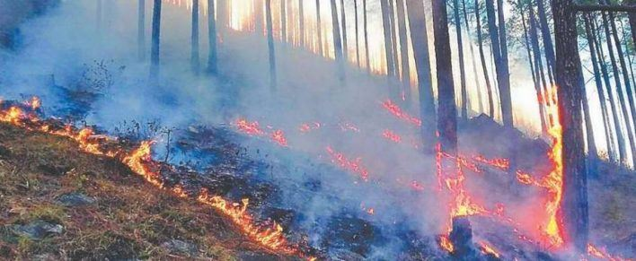 Forest Fires of Uttarakhand 03